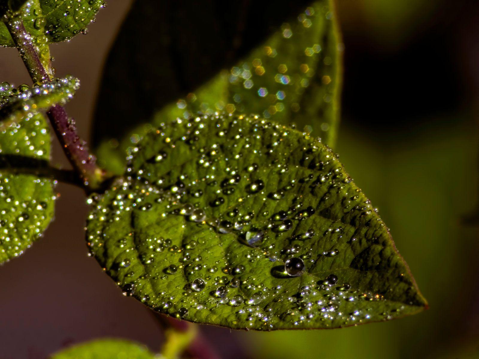 Drops on leaves 5 by Mackingster.deviantart.com on @DeviantArt