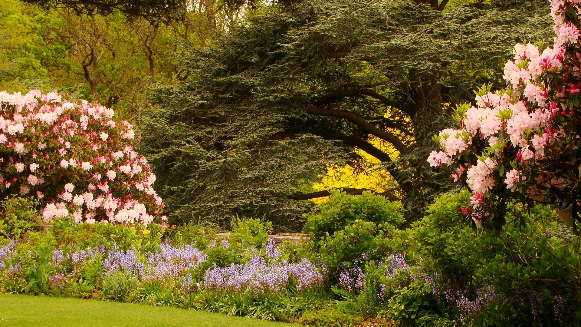 Rhododendron Bois Des Moutiers Varengeville Seine Maritime Rhododendron Vita Sackville West Et Bois