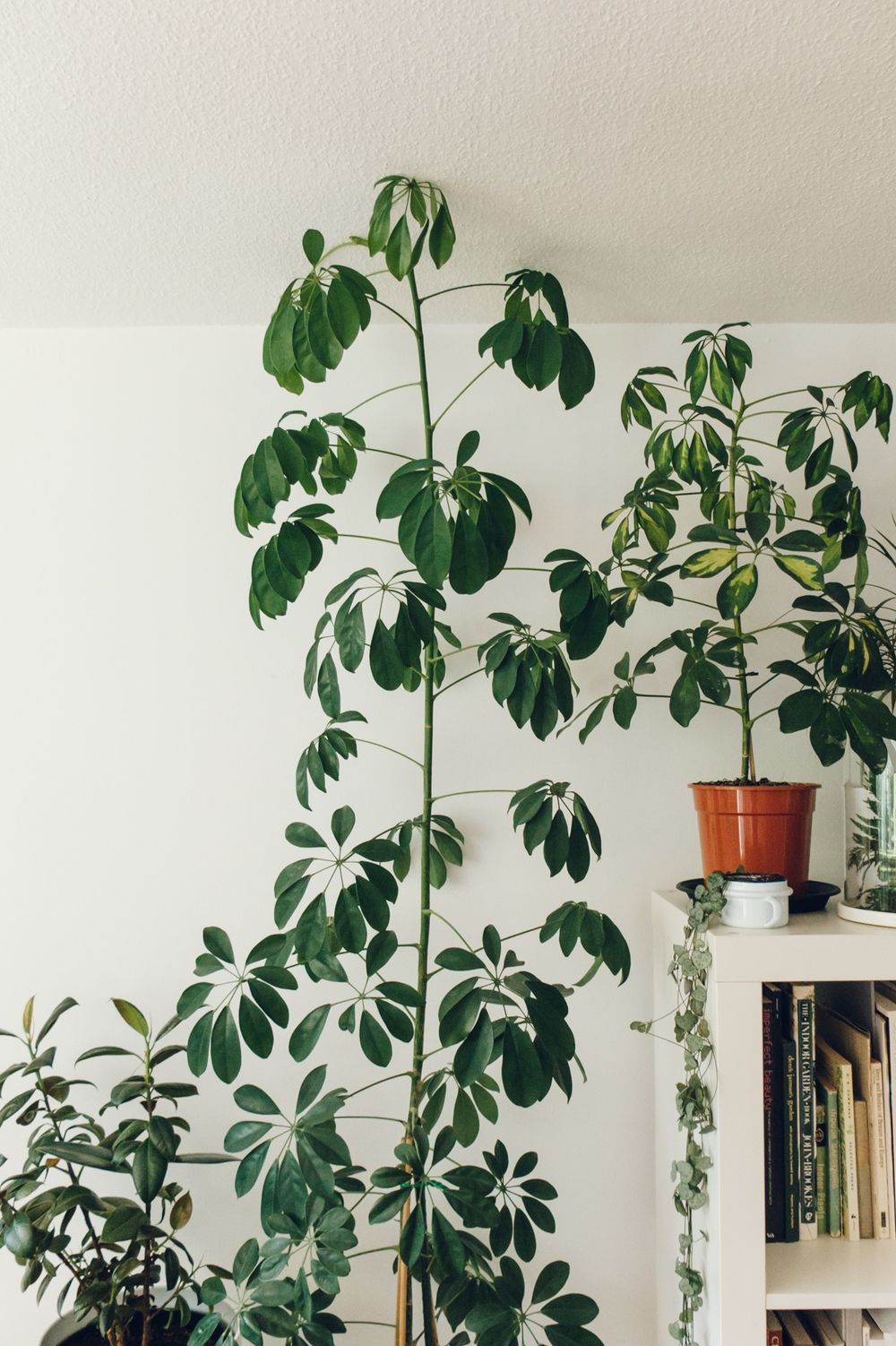 Houseplant Care Tips 244 Canal House Plant Care Big