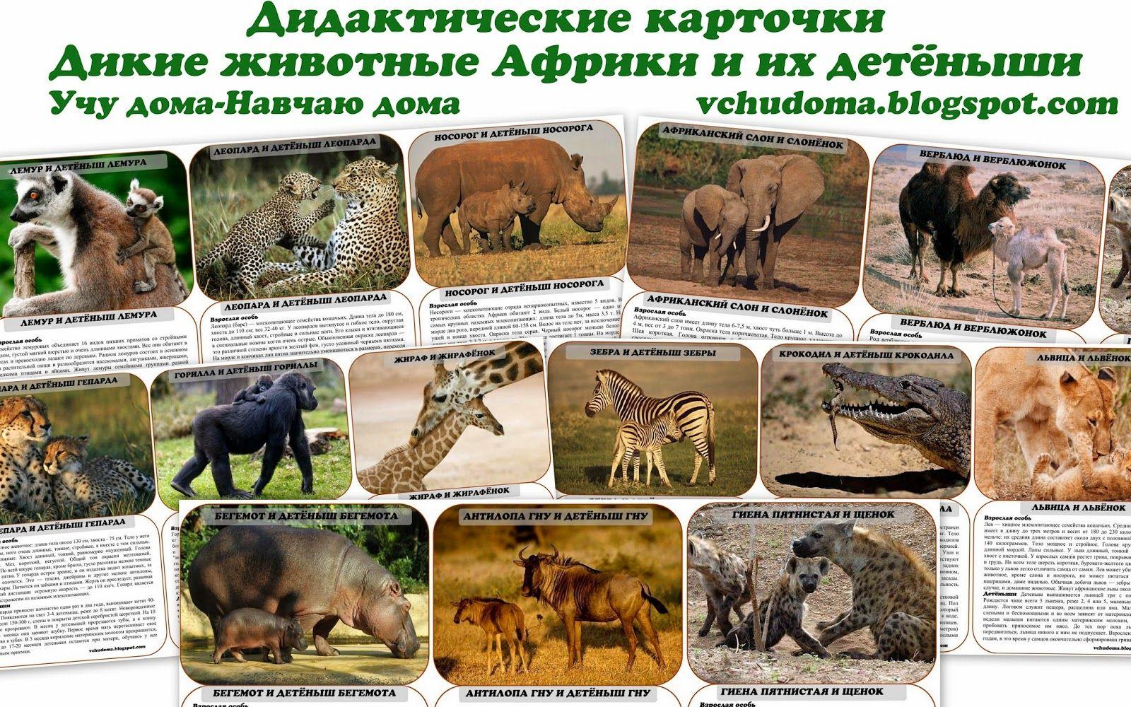 Картинки с описанием животных диких