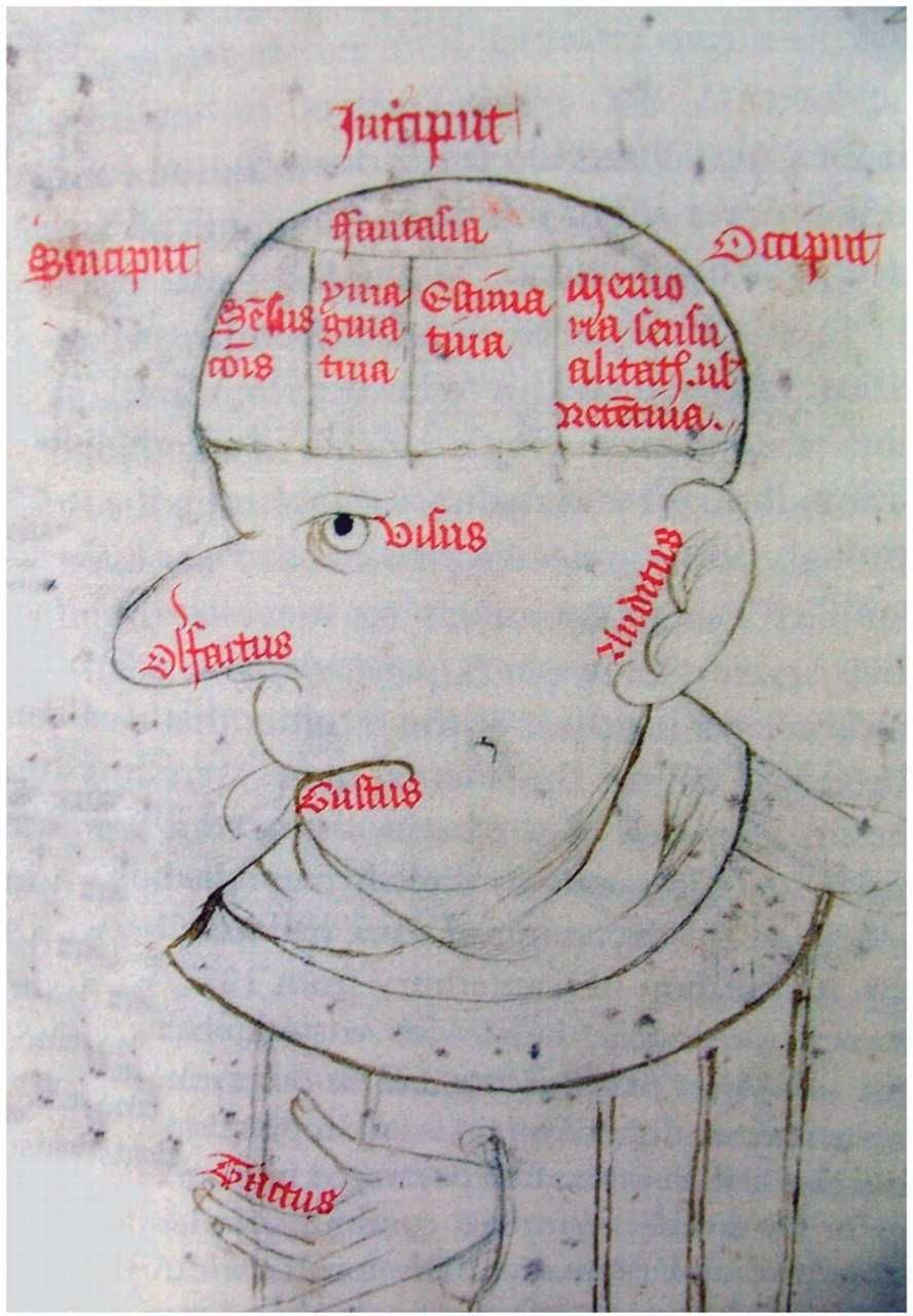 Diagram Of The Internal And External Senses In Augustines De