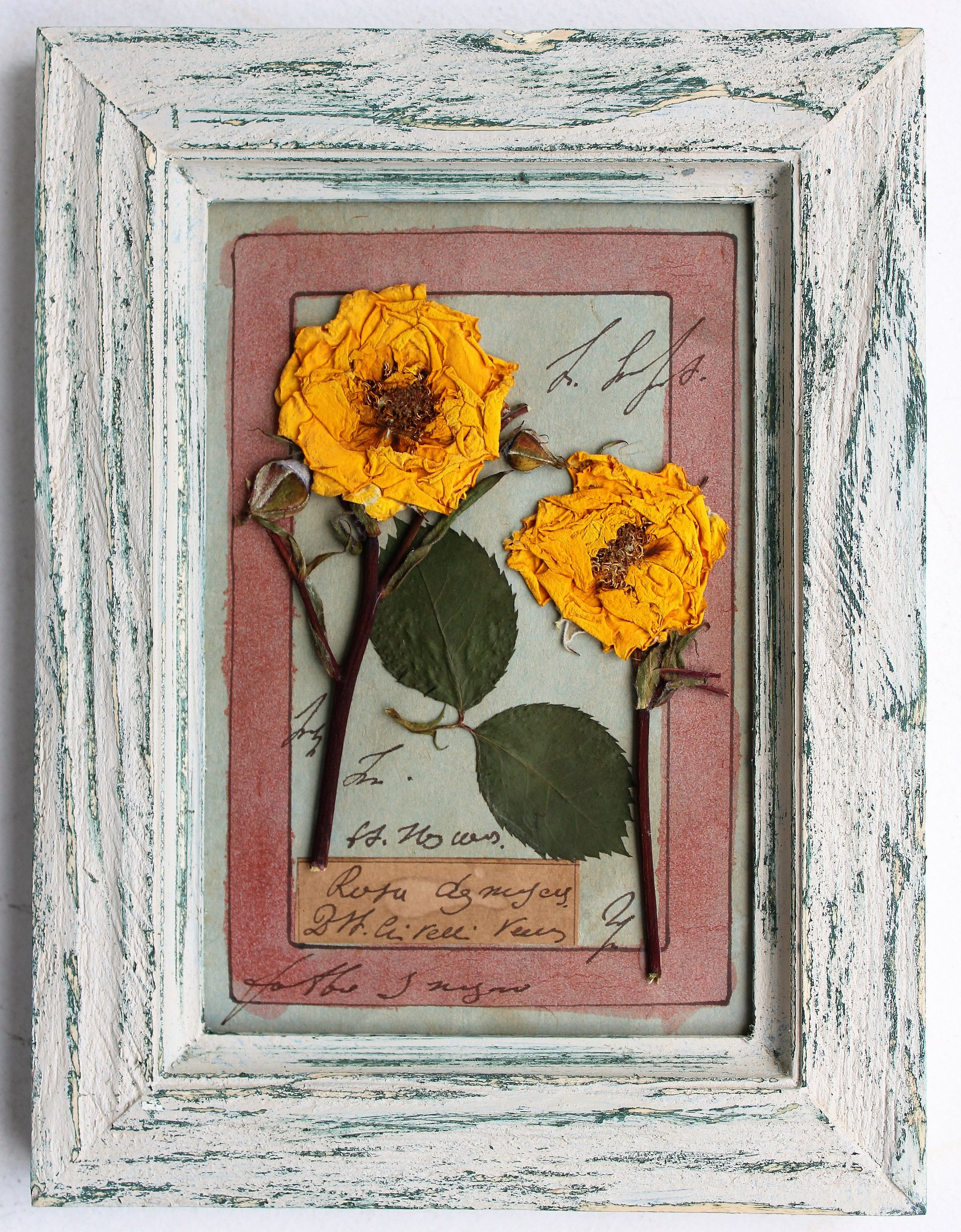Flores Prensadas Enmarcadas 8 X 6 Pulgadas 20 5 X 15 5 With Images Rustic Framed Art Pressed Flower Art Pressed Flower Crafts
