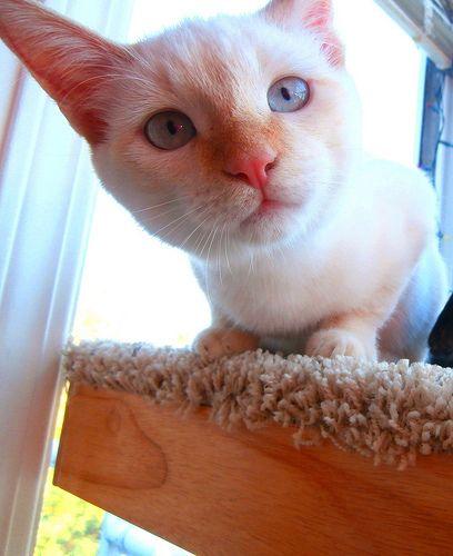 Cat Psychology Behaviour And Communication Articles Explaining