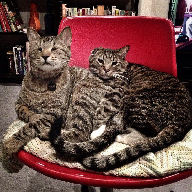 .Oskar and Klaus - best buds.