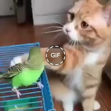 [GIF] The cat is trying to stroke the parrot