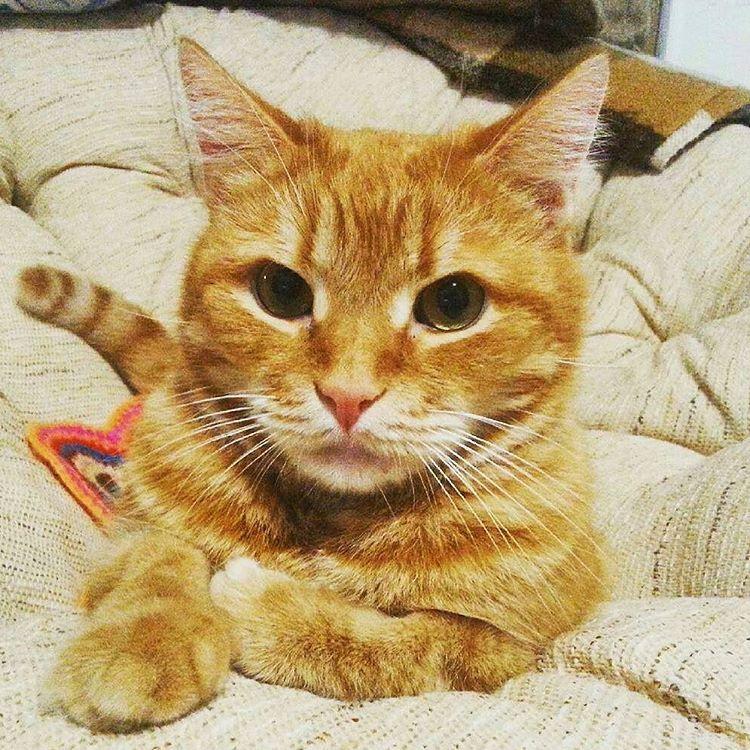 #Repost @seamus_fatbastard With @repostapp ・・・ Orange Is The New Cat.