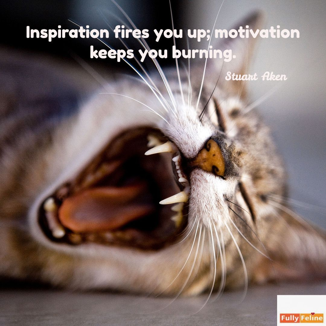 Inspiration and motivation are a great team quotes cat