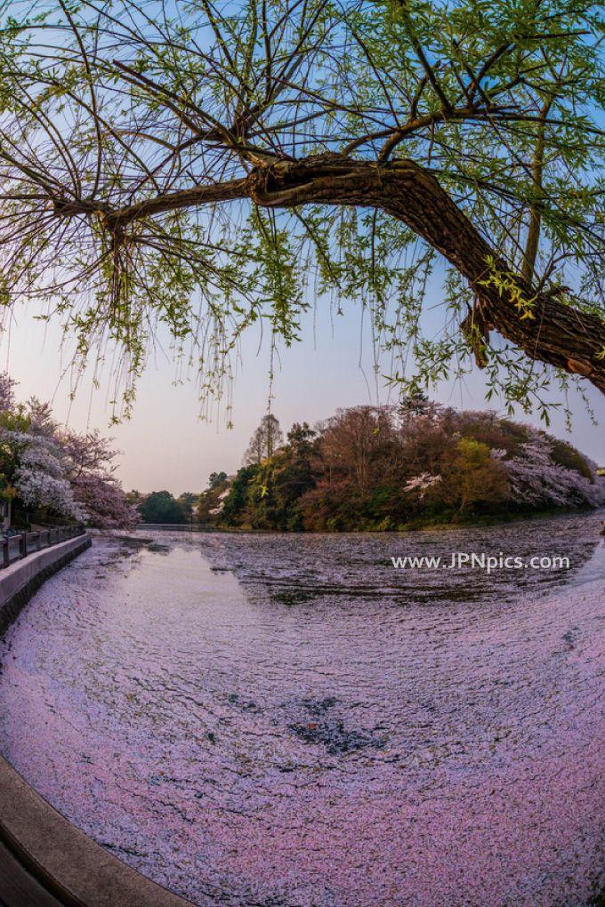 Takaoka castle park Nature park in Takaoka City, Toyama Prefecture More Japanese pics ... http://jpnpics.com