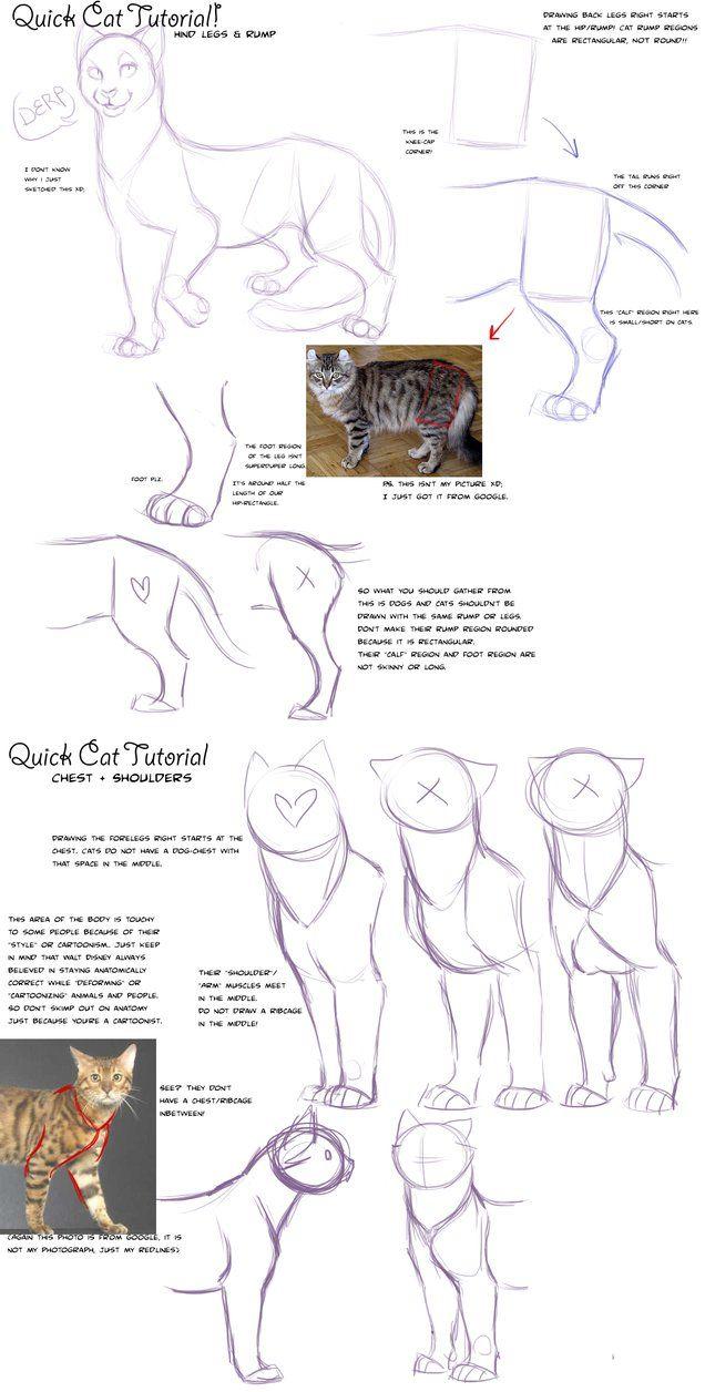 Big cat body tutorial by =KaiserTiger on deviantART