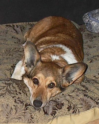 Puppy Mill Rescue Daphne The Daphinator Puppy Mills Puppy