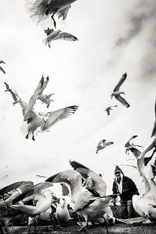 The Bird Man  |  Essaouira  |  Morocco  |  2013