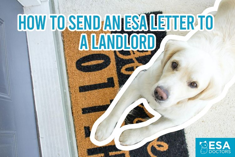 16+ Emotional support animal letter template florida ideas