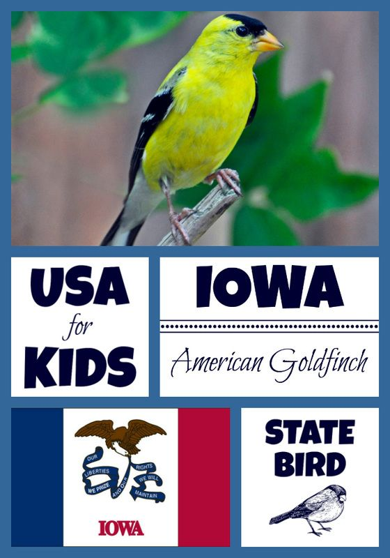 State Bird Coloring Pages By Usa State Birds Pinterest Bird