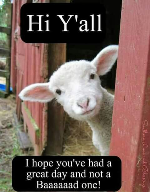 Pin By Jennifer Thompson On Good Morning Quotes Cute Animals Animals Funny Animal Pictures