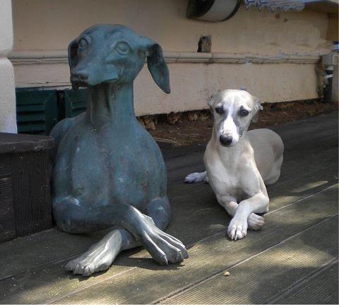 Facebook Grey Hound Dog Whippet Dog Dog Photos