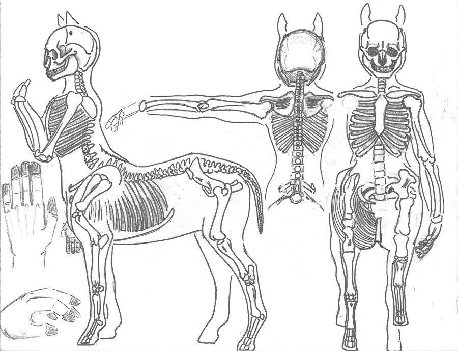 38++ Centaur field info