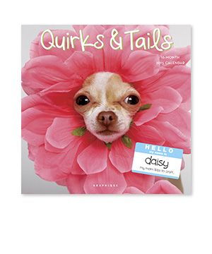 Quirks And Tails Chi Hua Hua Pinterest Hunde Coole Bilder