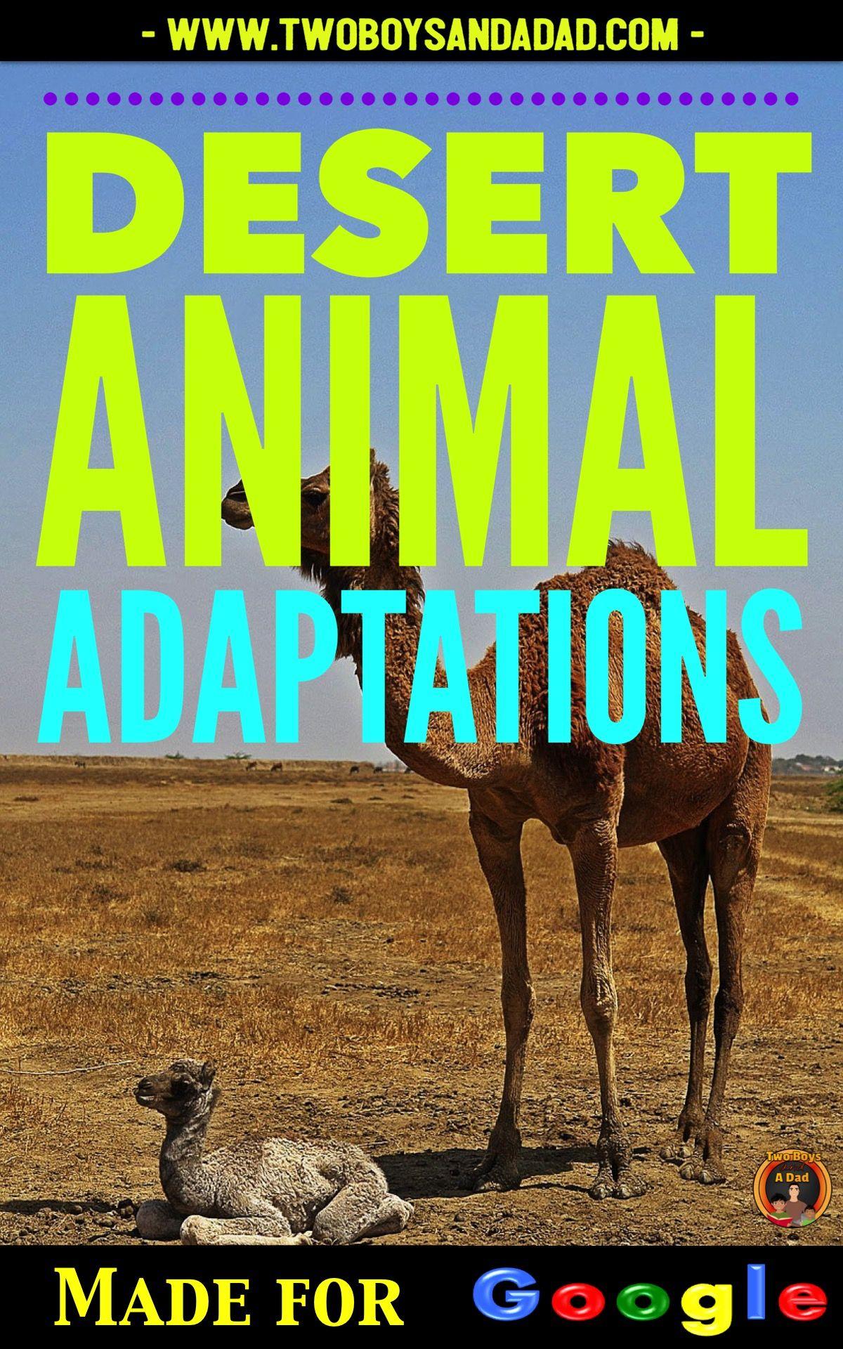 Desert Animal Adaptations Interactive Digital Notebook For Google