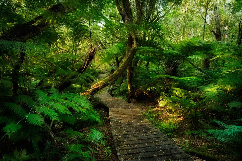 Knysna Forest Garden Route Ferns Africa Travel Knysna