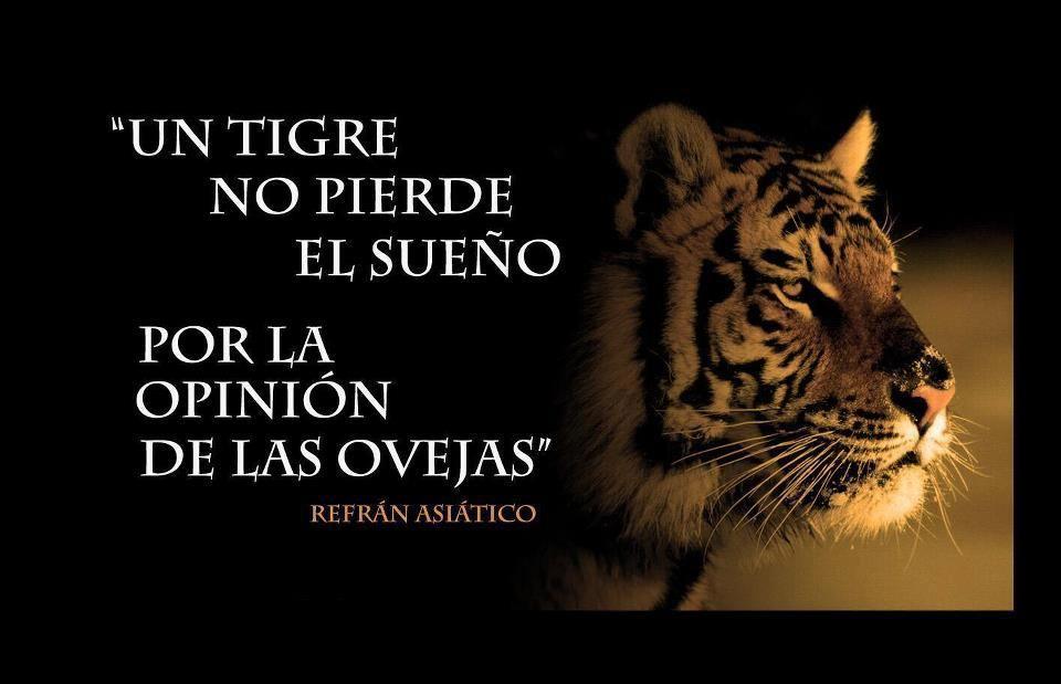 Un Tigre Siempre Es Un Tigre Motivación Refranes Y