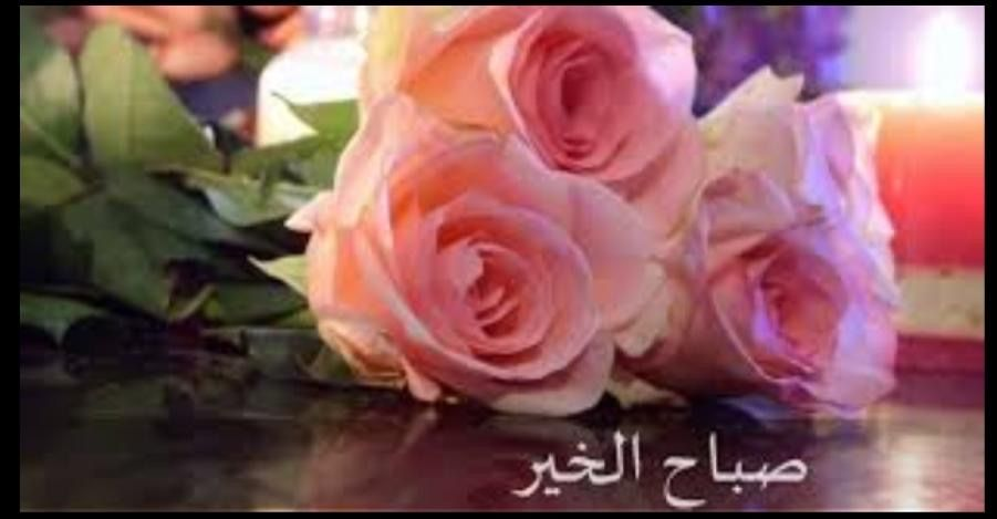 Pin By Iclal Buyukekmekci On صباح الخير Good Morning Rose Flowers Plants