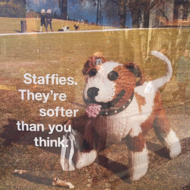Staffies are our favourites ) Staffies, Battersea dogs