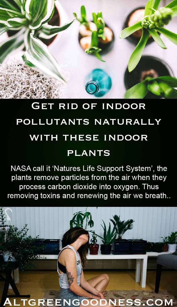 Top 5 Air Purifying Plants For The Home (With images