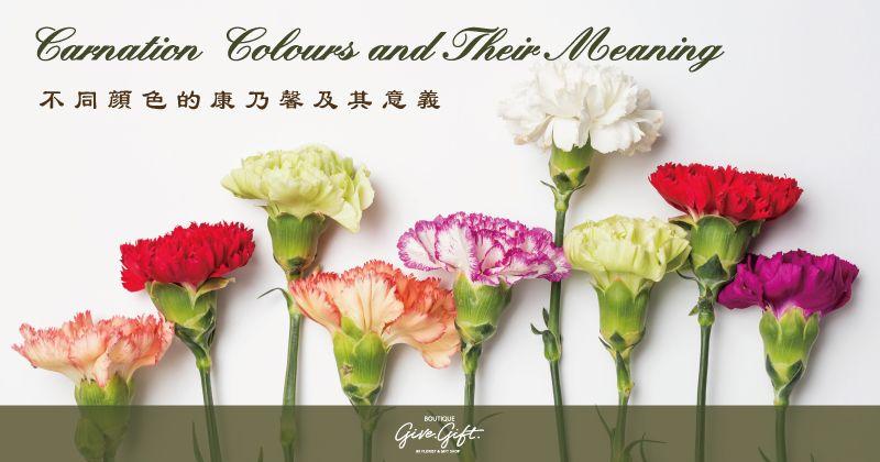 關於康乃馨 Carnation Colors Colours Carnations