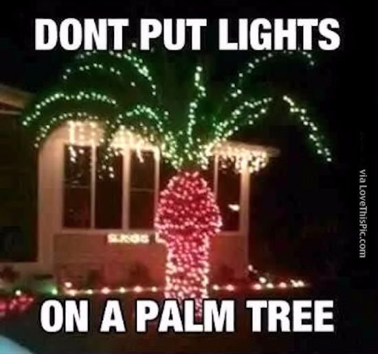 Why You Should Not Put Christmas Lights On A Palm Tree Christmas Memes Funny Funny Christmas Pictures Christmas Memes