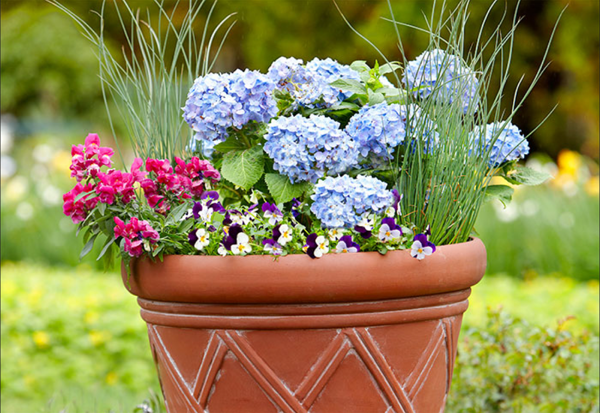 Pin On Container Garden