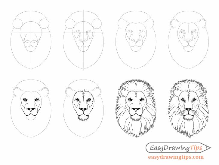 Para Dibujar Paso A Paso Un Wolfsgesicht Y Una Persona De Lobo Easydr Dibujo Paso A Paso Dibujo De La Cara Aprender A Dibujar Animales