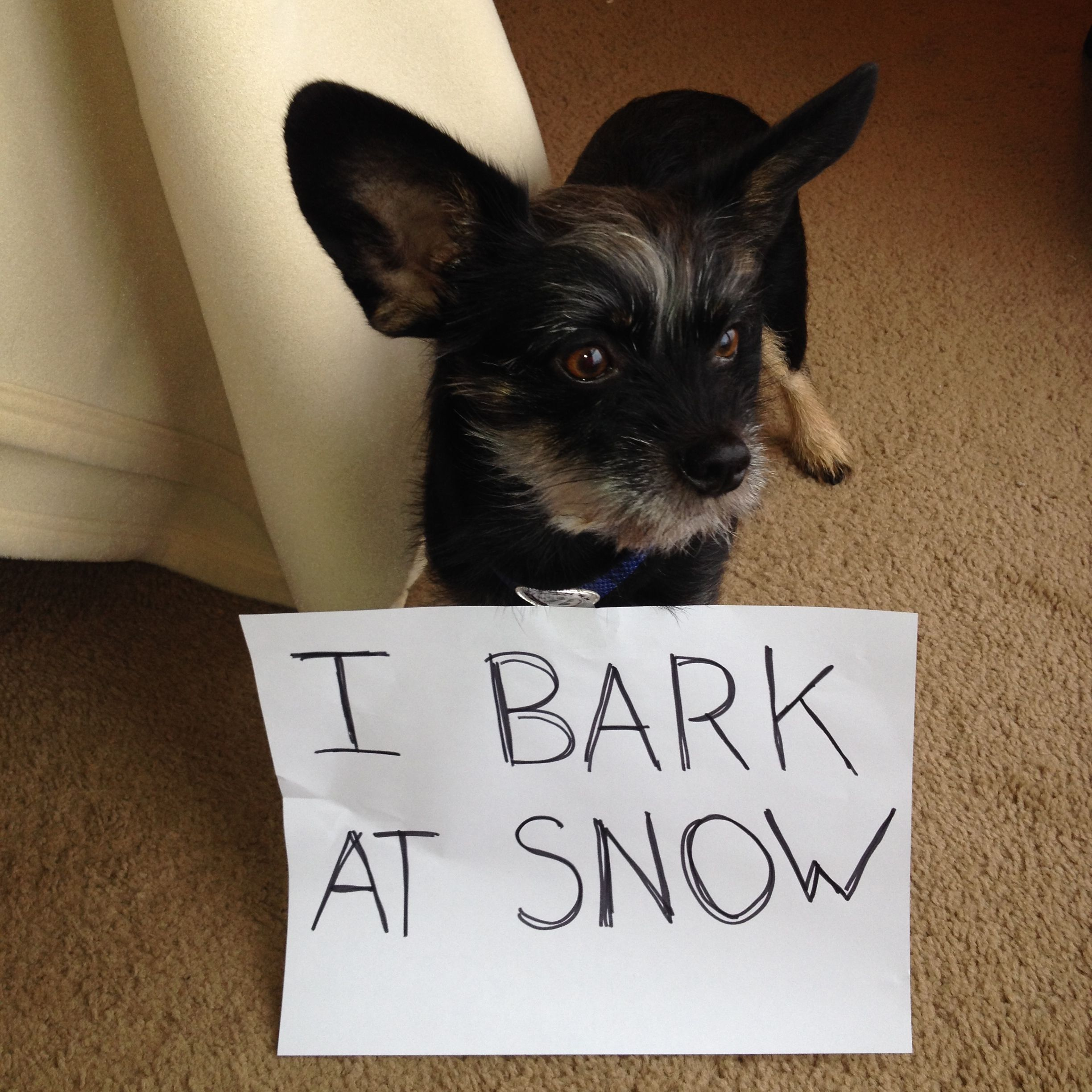 Facebook Fan Jessica says: Nothing outside but the snow, but entirely bark-worthy. All. Day. Long. #UnShameYourPet