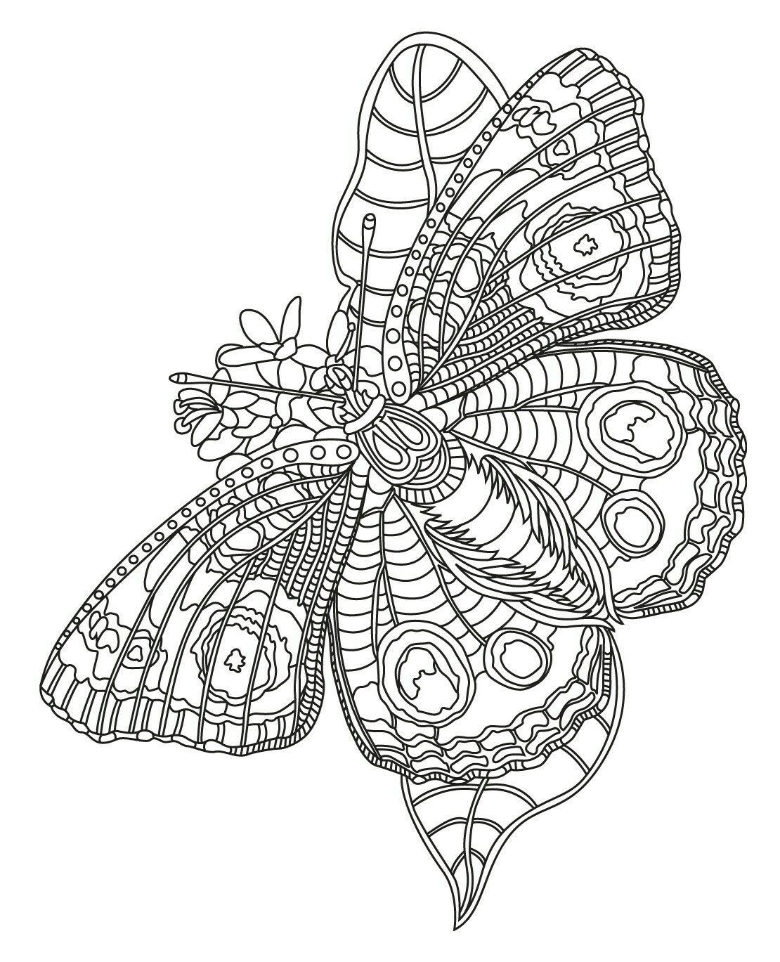 Para colorear mariposa | Coloring pages | Pinterest | Colorear ...