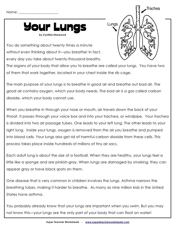 Lungs Worksheet And Questions My Body Exercise Lesson