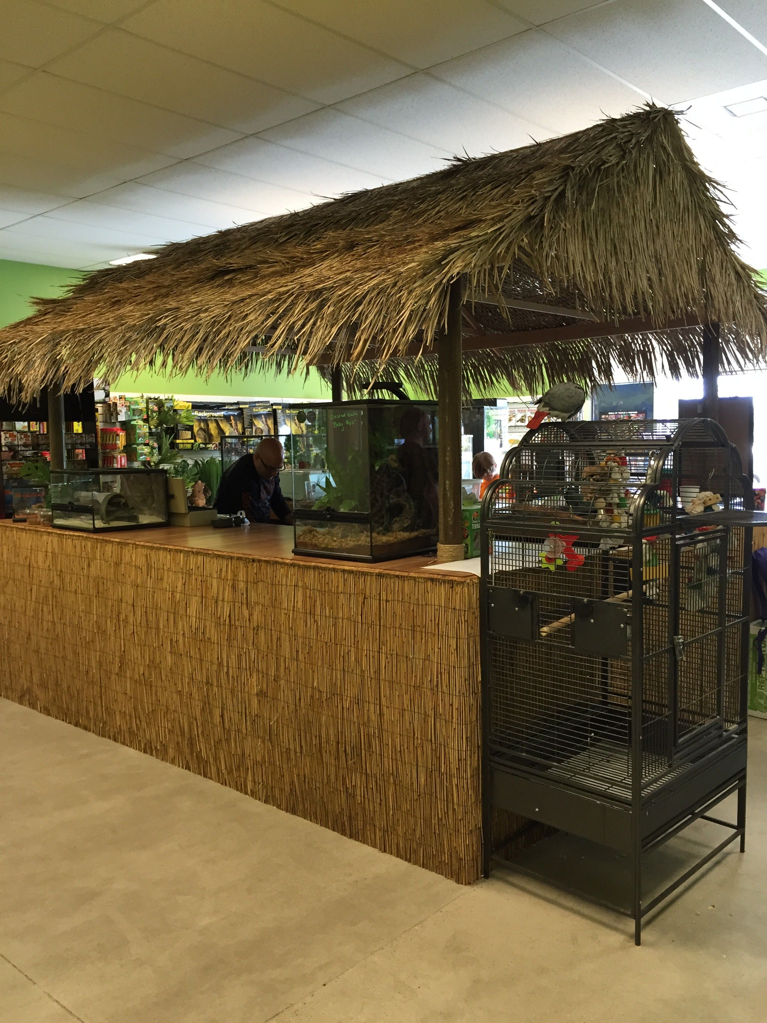Redding Reptiles The Story Behind Your Local Reptile Store Reptile Store Reptiles And Amphibians Pet Store