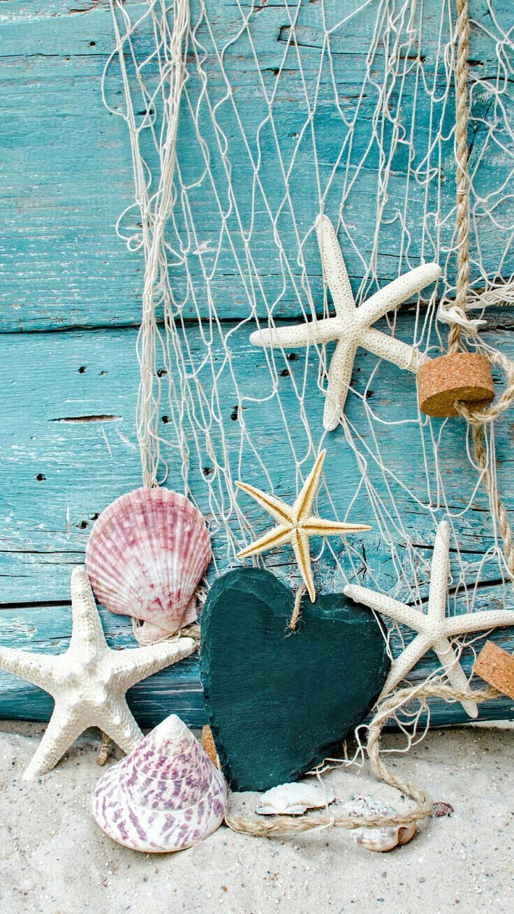 What a pretty ocean net, scallop shells and starfish