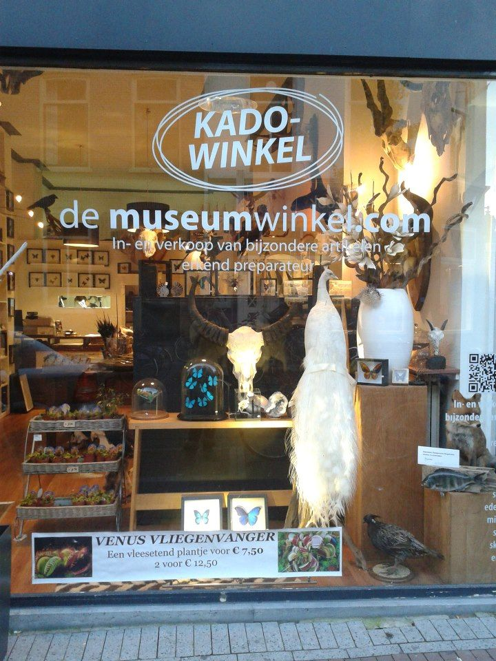 our shop! www.demuseumwinkel | butterflies taxidermy | pinterest