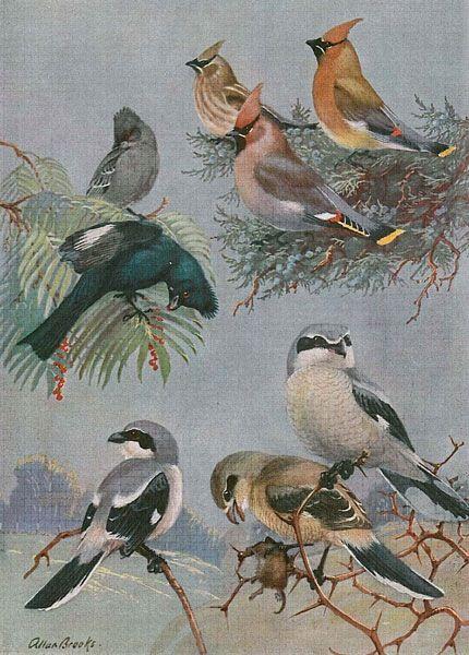 Imagen Sobre Arte De Aves De Herminia En Pajaritos Cafe Pinturas