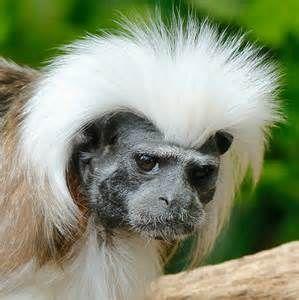Monkey Bad Hair Day Bing Images Bad Hair Day Bad Hair Hair Day