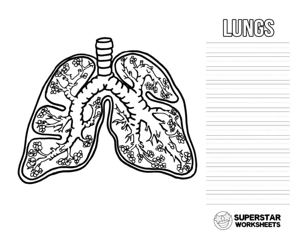 These Fee Printable Human Lung Worksheets Include Coloring