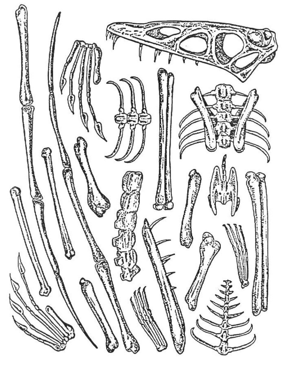 Free Worksheet Fossil Worksheets 78 images about fossils on pinterest science vocabulary earth and student