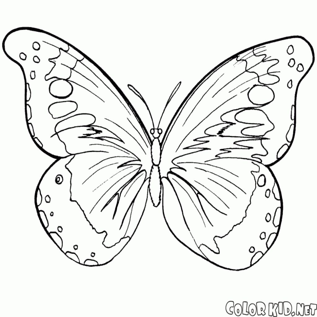 Disegni Da Colorare Farfalla E Lestate Per Farfalle Da Colorare E