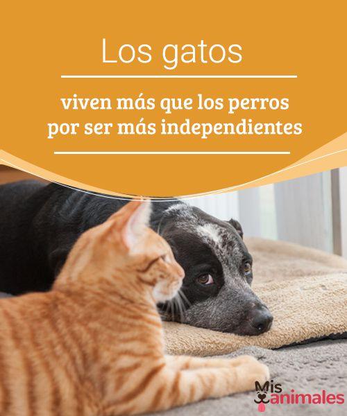Los Gatos Viven Más Que Los Perros Por Ser Más Independientes Mis Animales Perros Gatos Animales