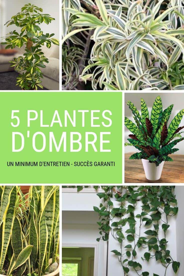 5 plantes vertes qui aiment l'ombre, et faciles d ...