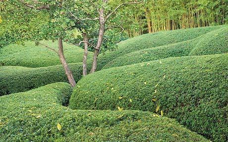 Fernando Caruncho's geometric gardens