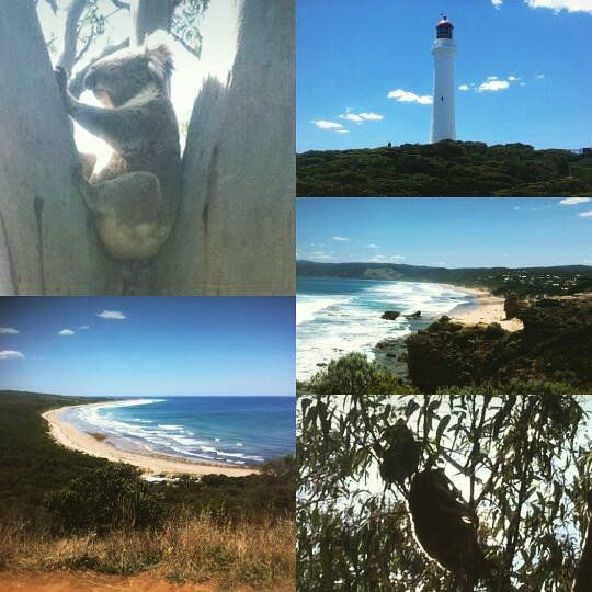 A year ago to the day. I was camping at Apollo Bay down the Great Ocean Road VIC Australia. Would give anything to go back. #GreatOceanRoad #GOR #VIC #Australia #TravelAustralia #ExploreAustralia #TourismAustralia #discoverAustralia #Koalas #Roadtrips by aj__187