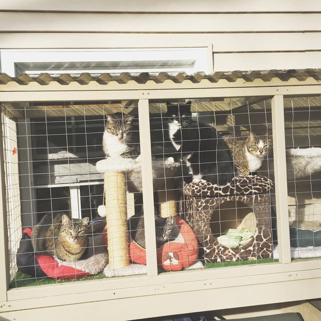 Easy Diy Cat Enclosure To Keep Your Indoor Cats Happy And Safe In 2020 Outdoor Cats Diy Cat Enclosure Cat Cages