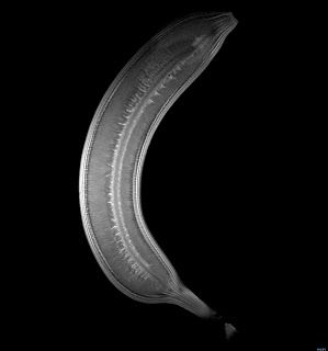 Banana X-Ray