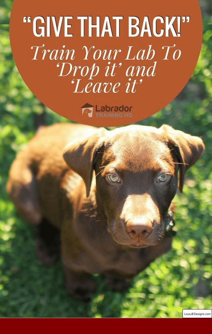 How To Train Your Dog To Walk Better On A Leash and Pics