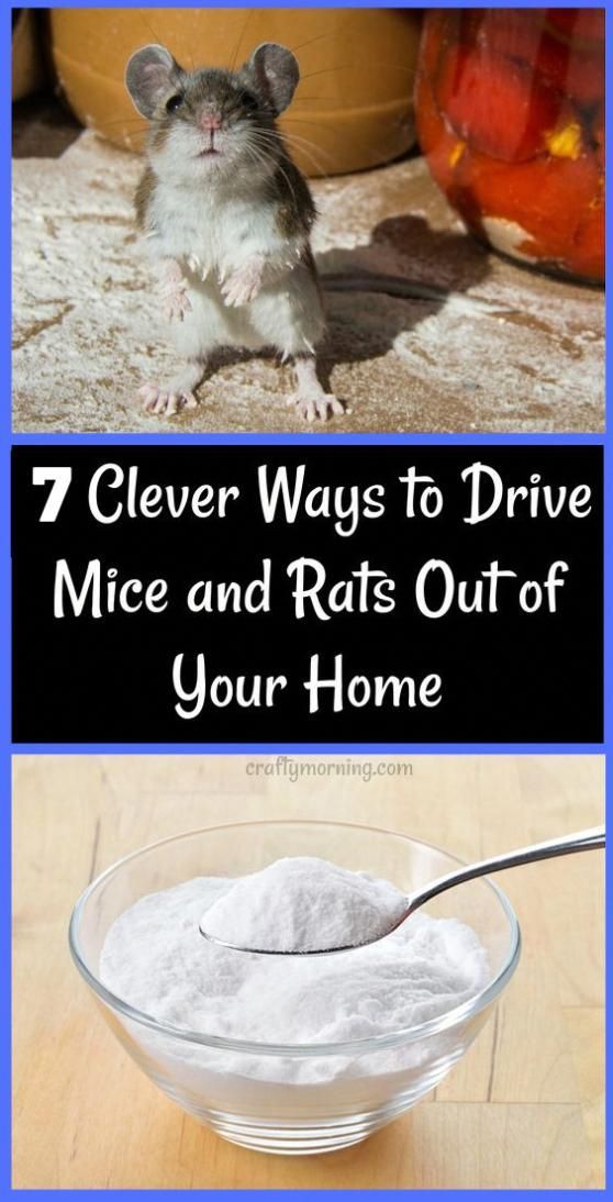 Even though mice are more prone to have inside your house, unlike rats, they…